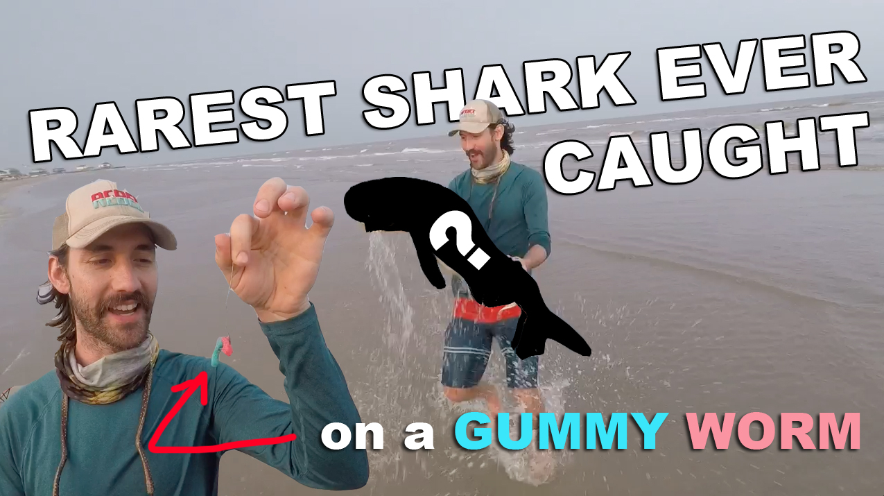 SHARK FISHING WITH GUMMY WORMS